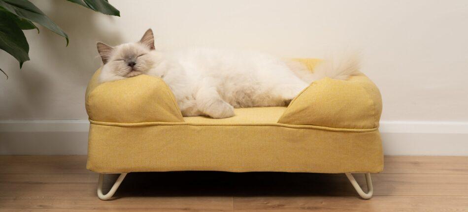 kot-ragdoll-śpiący-na-żółtym-legowisku-z-zagłówkiem